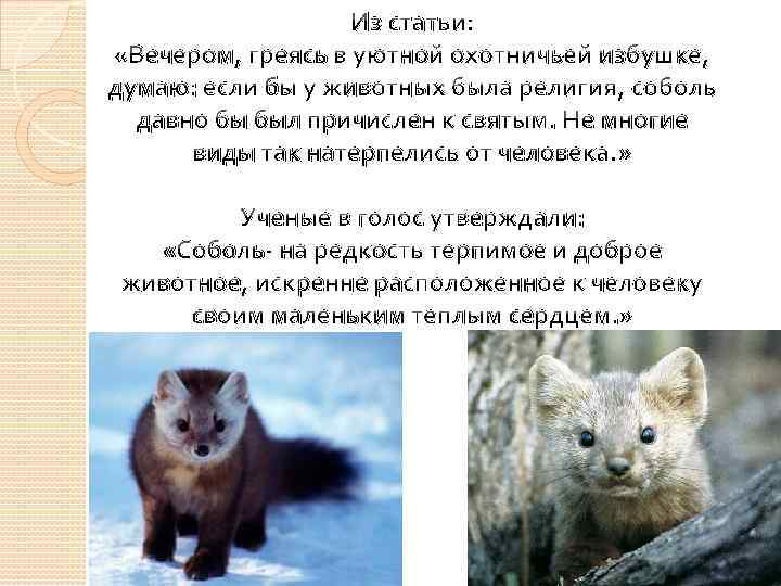 Из статьи: «Вечером, греясь в уютной охотничьей избушке, думаю: если бы у животных была