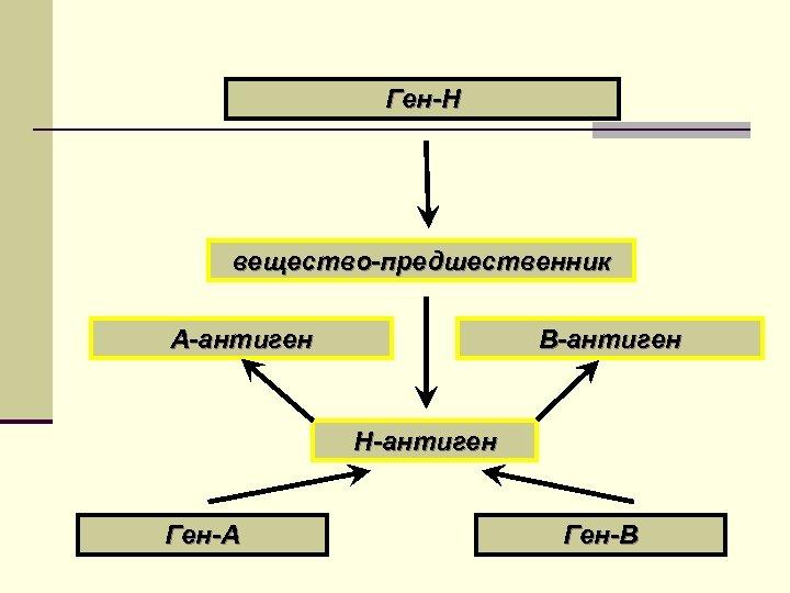 Ген-Н вещество-предшественник А-антиген В-антиген Н-антиген Ген-А Ген-В