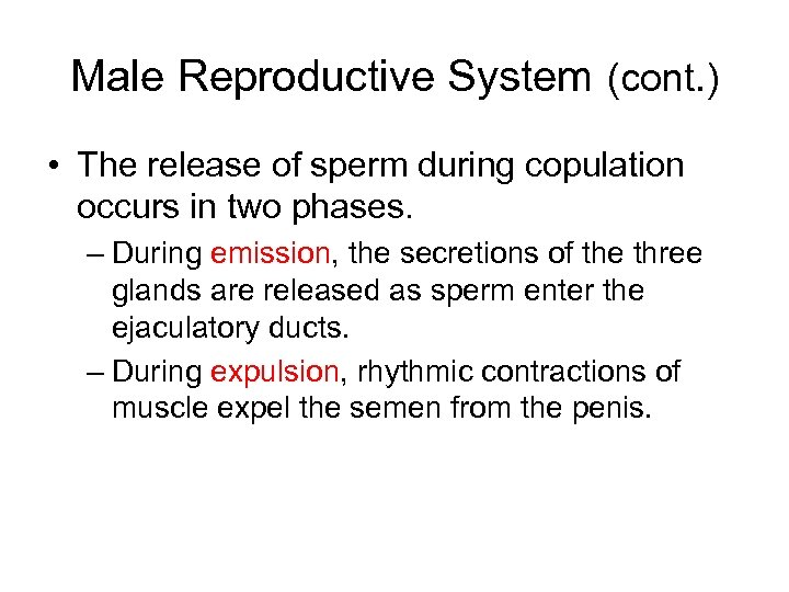 Male Reproductive System (cont. ) • The release of sperm during copulation occurs in