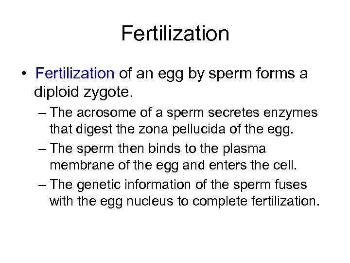 Fertilization • Fertilization of an egg by sperm forms a diploid zygote. – The