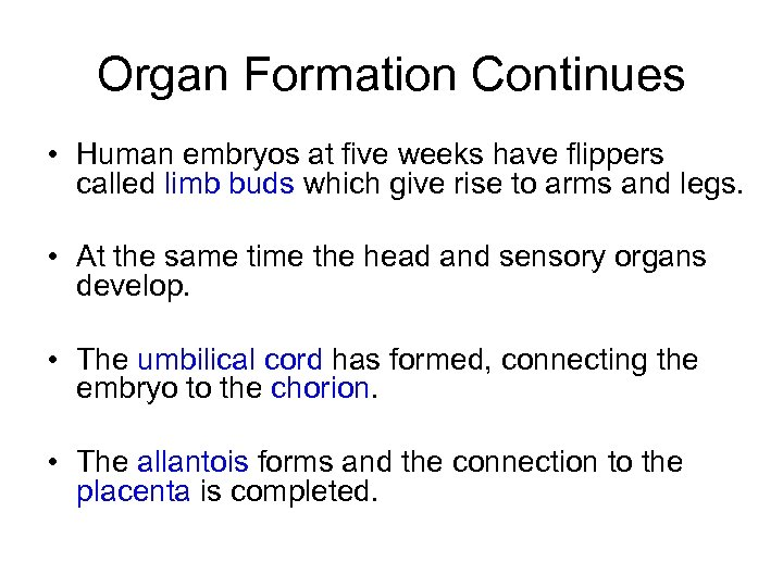 Organ Formation Continues • Human embryos at five weeks have flippers called limb buds