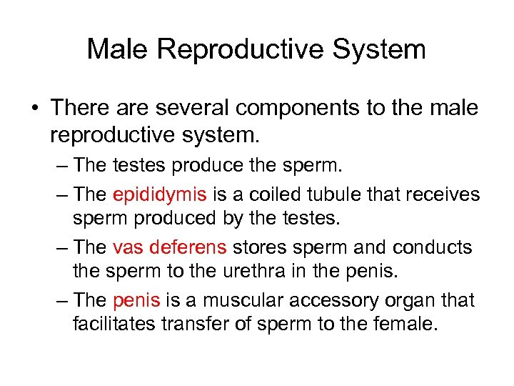 Male Reproductive System • There are several components to the male reproductive system. –