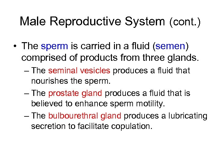 Male Reproductive System (cont. ) • The sperm is carried in a fluid (semen)