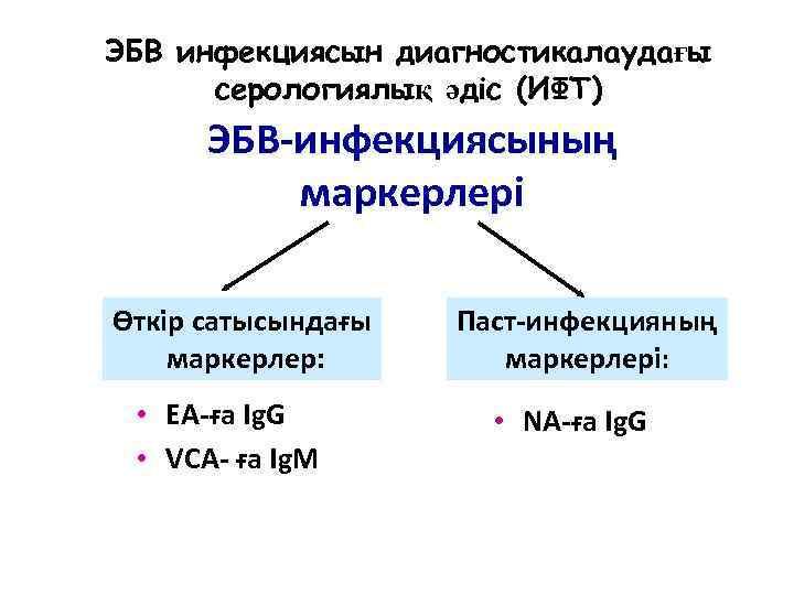 ЭБВ инфекциясын диагностикалаудағы серологиялық әдіс (ИФТ) ЭБВ-инфекциясының маркерлері Өткір сатысындағы маркерлер: • EA-ға Ig.
