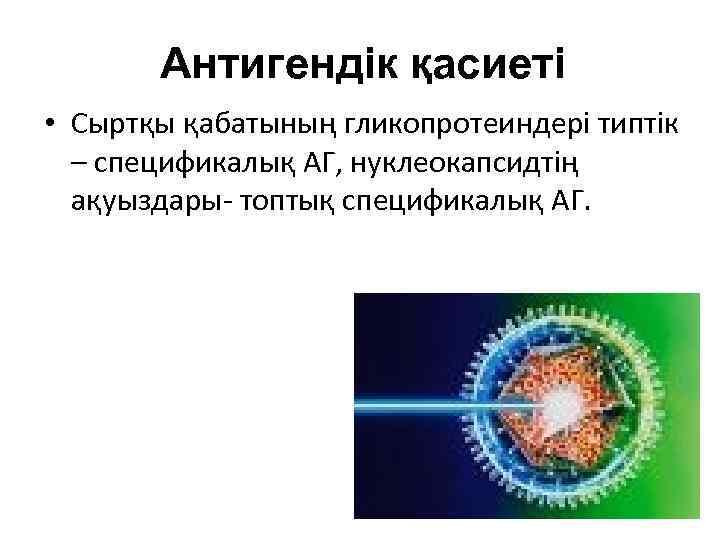 Антигендік қасиеті • Сыртқы қабатының гликопротеиндері типтік – спецификалық АГ, нуклеокапсидтің ақуыздары- топтық спецификалық