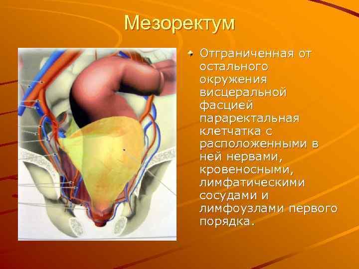 Мезоректум Отграниченная от остального окружения висцеральной фасцией параректальная клетчатка с расположенными в ней нервами,