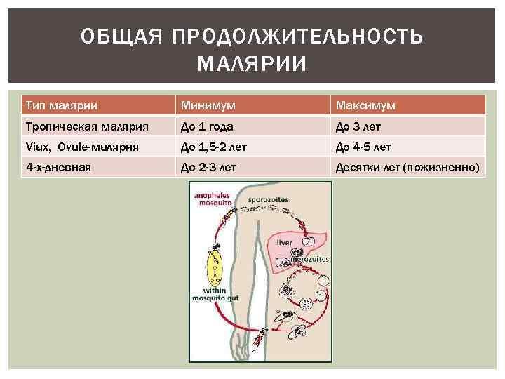 ОБЩАЯ ПРОДОЛЖИТЕЛЬНОСТЬ МАЛЯРИИ Тип малярии Минимум Максимум Тропическая малярия До 1 года До 3