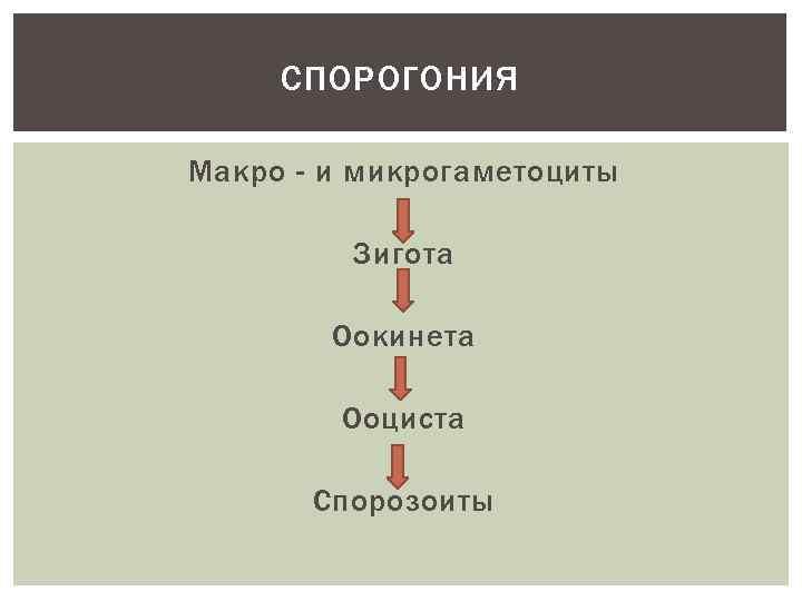 СПОРОГОНИЯ Макро - и микрогаметоциты Зигота Оокинета Ооциста Спорозоиты
