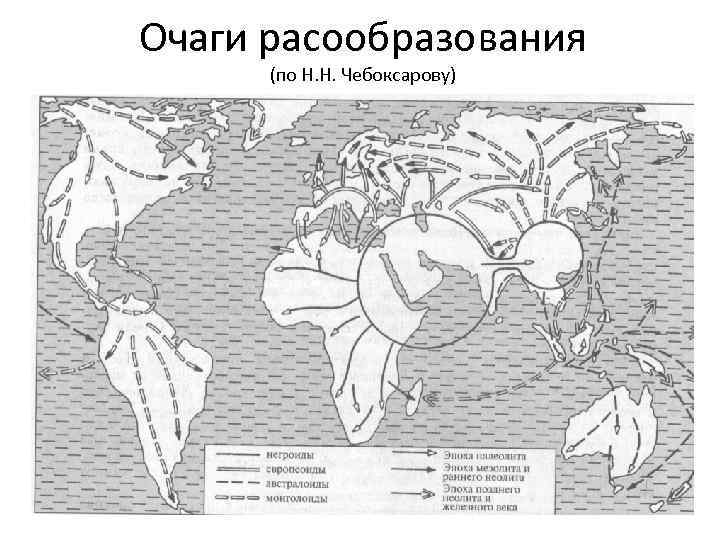 Очаги расообразования (по Н. Н. Чебоксарову)