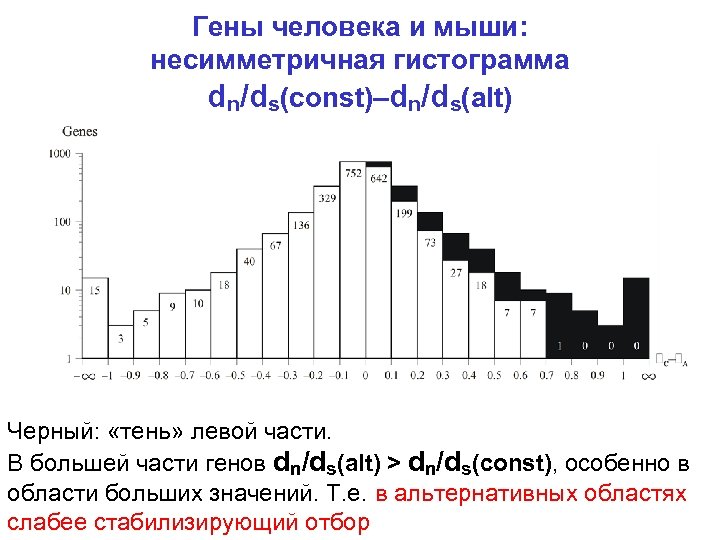 Гены человека и мыши: несимметричная гистограмма dn/ds(const)–dn/ds(alt) Черный: «тень» левой части. В большей части