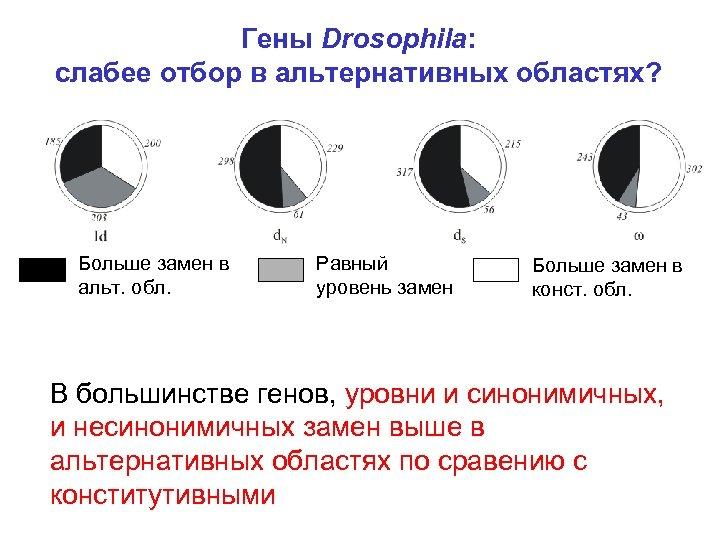 Гены Drosophila: слабее отбор в альтернативных областях? Больше замен в альт. обл. Равный уровень
