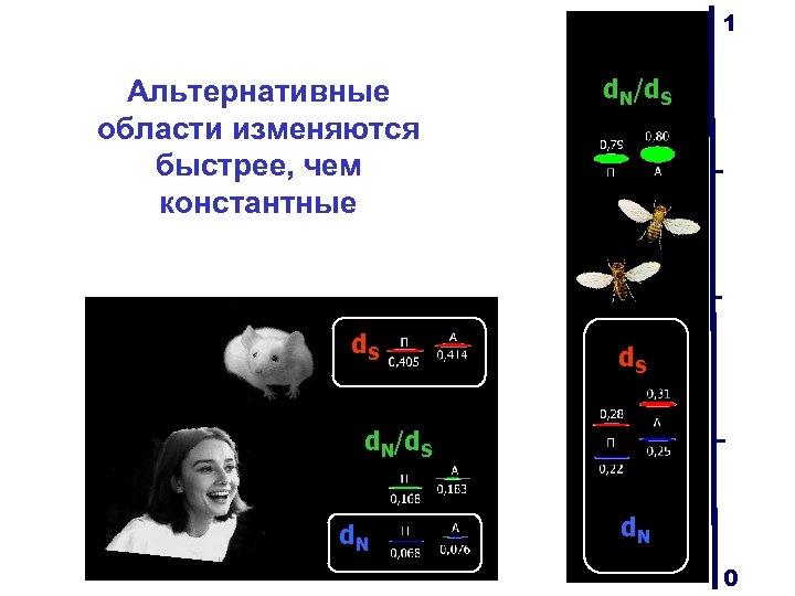 1 Альтернативные области изменяются быстрее, чем константные d. S d. N/d. S d. N