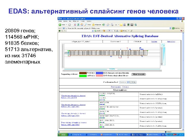 EDAS: альтернативный сплайсинг генов человека 20809 генов; 114568 м. РНК; 91835 белков; 51713 альтернатив,