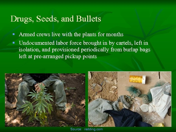 Drugs, Seeds, and Bullets § Armed crews live with the plants for months §