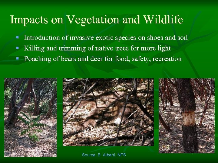 Impacts on Vegetation and Wildlife § Introduction of invasive exotic species on shoes and