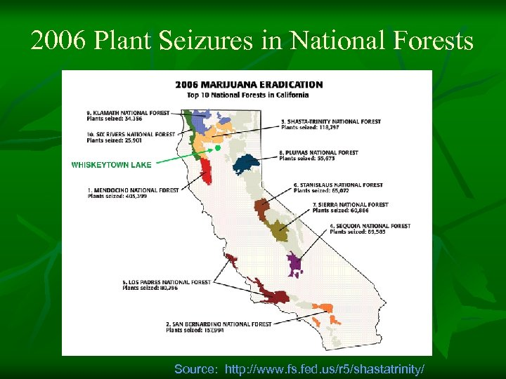 2006 Plant Seizures in National Forests Source: http: //www. fs. fed. us/r 5/shastatrinity/