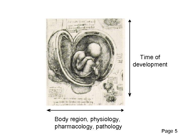 Time of development Body region, physiology, pharmacology, pathology Page 5