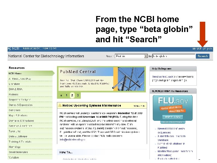 """From the NCBI home page, type """"beta globin"""" and hit """"Search"""" Fig. 2. 5"""