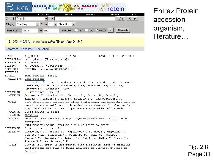 Entrez Protein: accession, organism, literature… Fig. 2. 8 Page 31