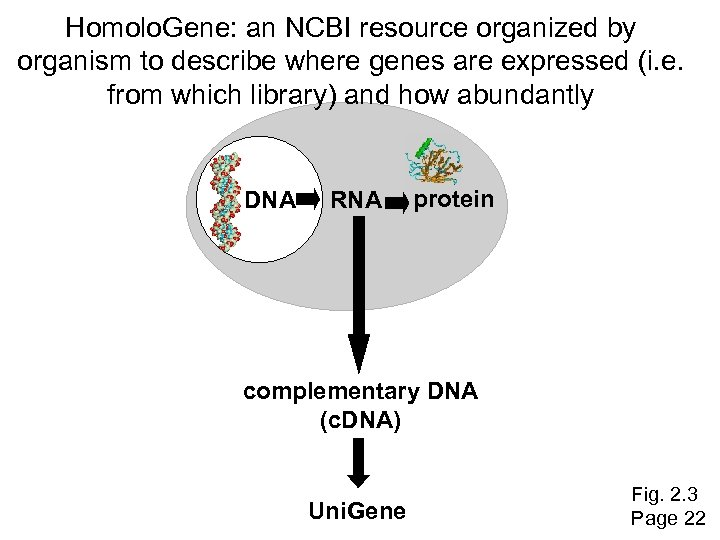 Homolo. Gene: an NCBI resource organized by organism to describe where genes are expressed