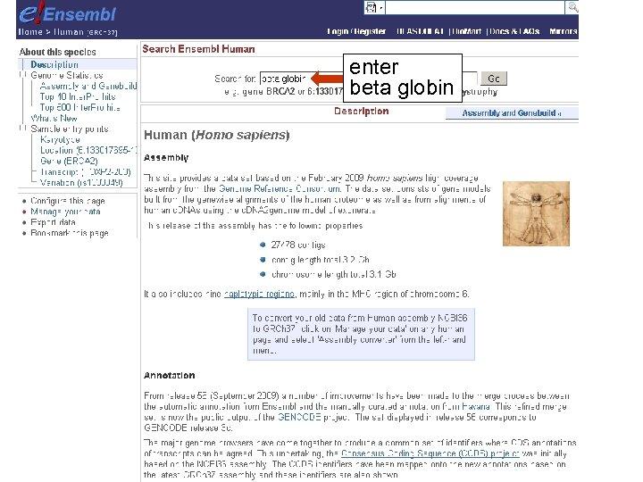 enter beta globin