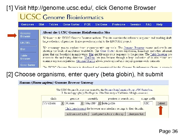 [1] Visit http: //genome. ucsc. edu/, click Genome Browser [2] Choose organisms, enter query