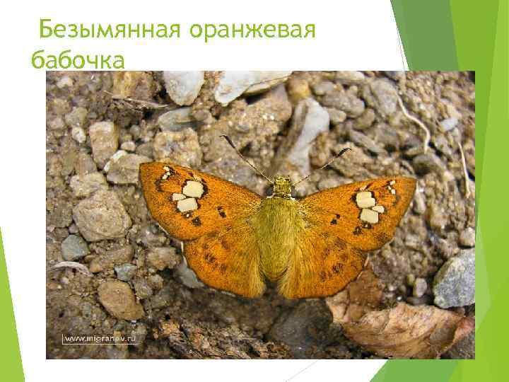 Безымянная оранжевая бабочка