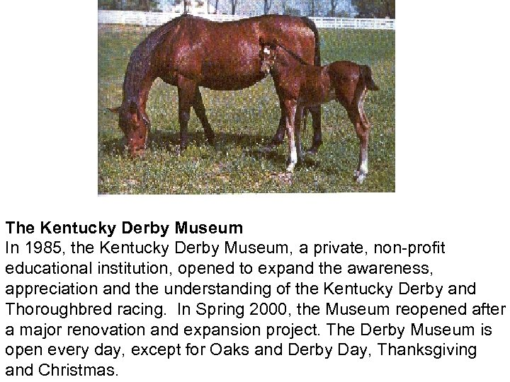 The Kentucky Derby Museum In 1985, the Kentucky Derby Museum, a private, non-profit educational