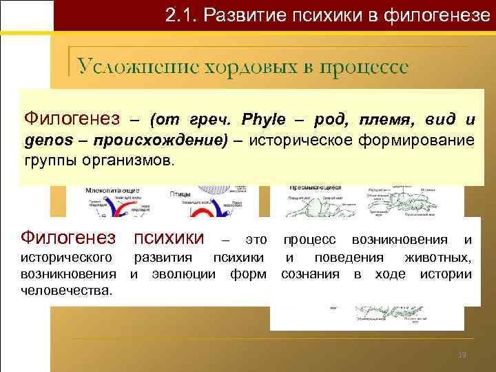 2. 1. Развитие психики в филогенезе Филогенез – (от греч. Phyle – род, племя,