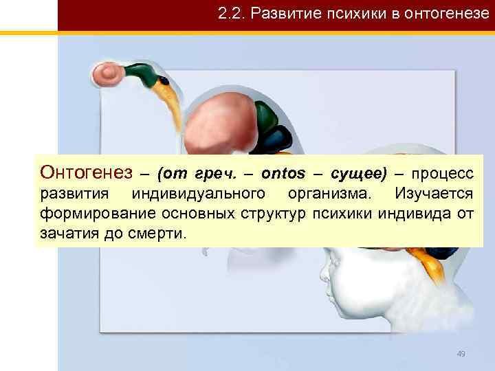 2. 2. Развитие психики в онтогенезе Онтогенез – (от греч. – ontos – сущее)