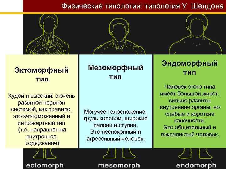 Физические типологии: типология У. Шелдона Эктоморфный тип Худой и высокий, с очень развитой нервной