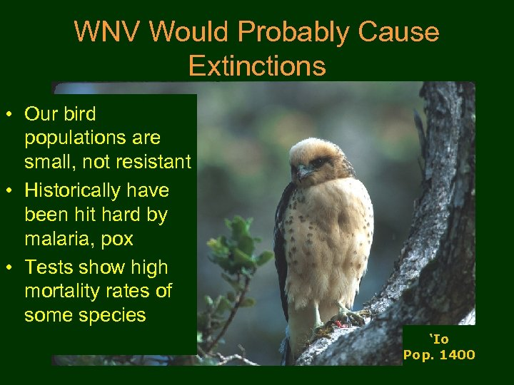 WNV Would Probably Cause Extinctions • Our bird populations are small, not resistant •