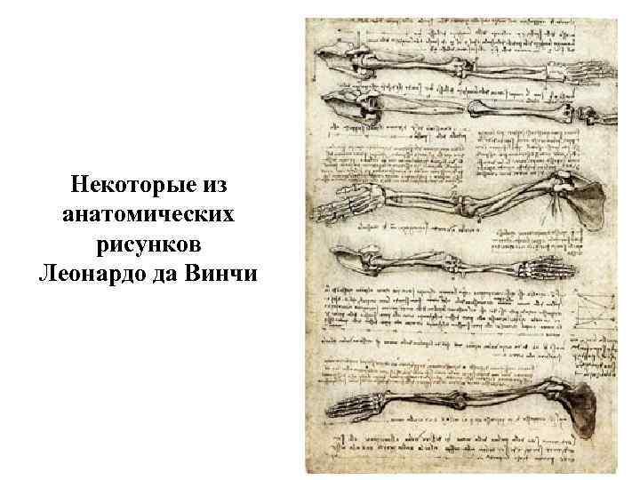 Некоторые из анатомических рисунков Леонардо да Винчи