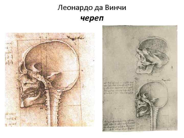 Леонардо да Винчи череп