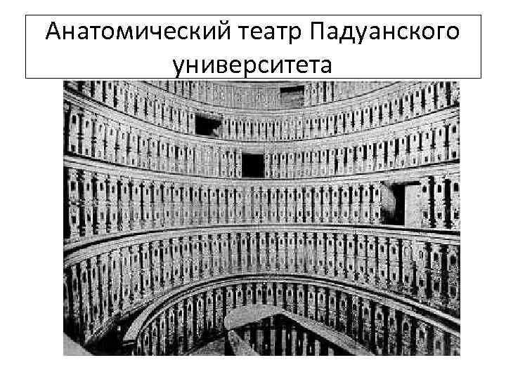 Анатомический театр Падуанского университета