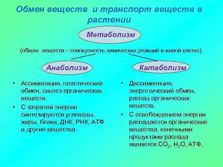 Обмен веществ и транспорт веществ в растении Метаболизм (обмен веществ – совокупность химических реакций
