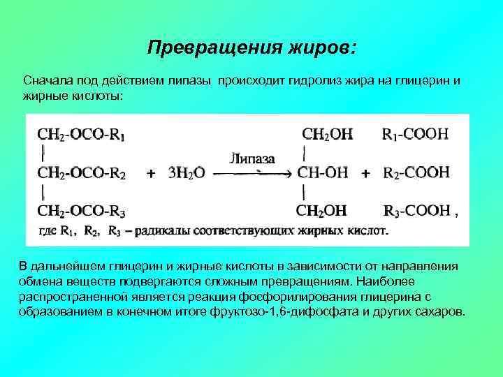 Превращения жиров: Сначала под действием липазы происходит гидролиз жира на глицерин и жирные кислоты: