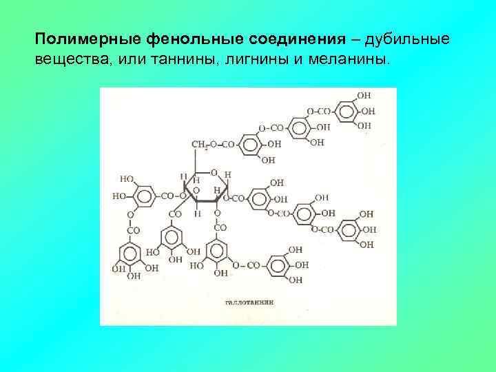 Полимерные фенольные соединения – дубильные вещества, или таннины, лигнины и меланины.