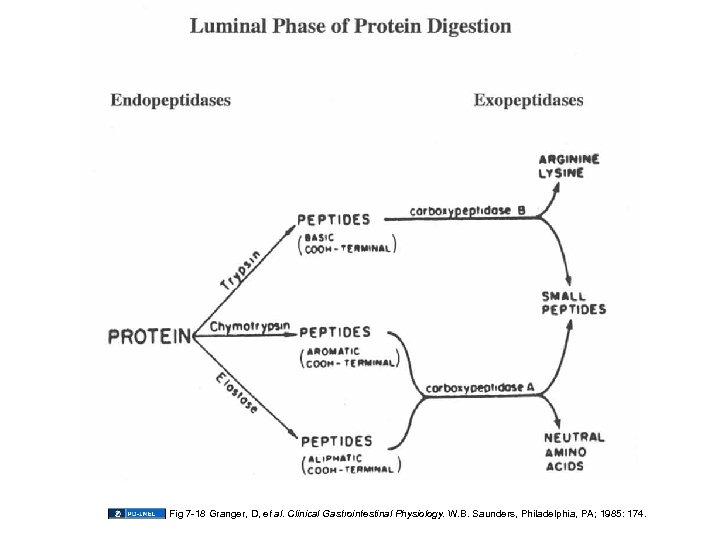Fig 7 -18 Granger, D, et al. Clinical Gastrointestinal Physiology. W. B. Saunders, Philadelphia,