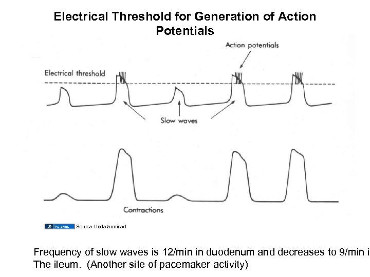 Electrical Threshold for Generation of Action Potentials Source Undetermined Frequency of slow waves is