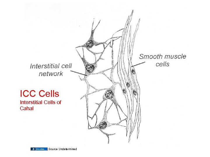 ICC Cells Interstitial Cells of Cahal Source Undetermined