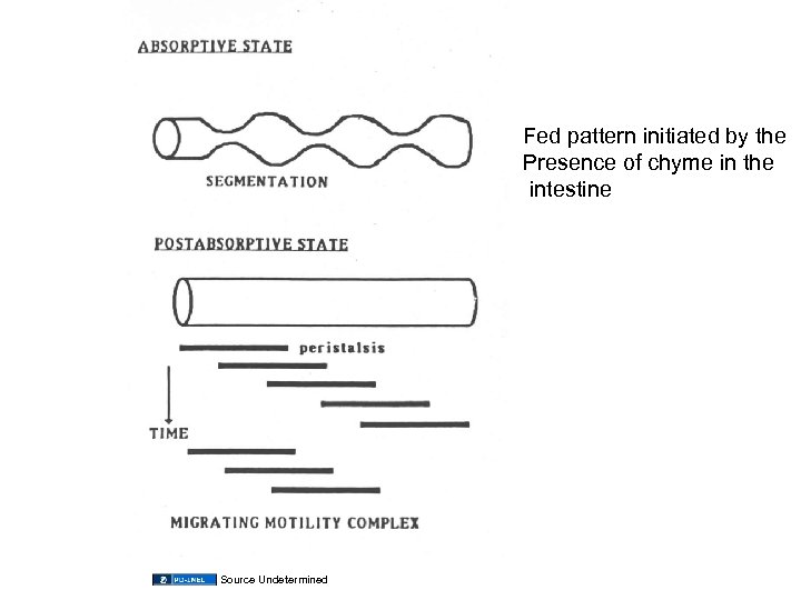 Fed pattern initiated by the Presence of chyme in the intestine Source Undetermined