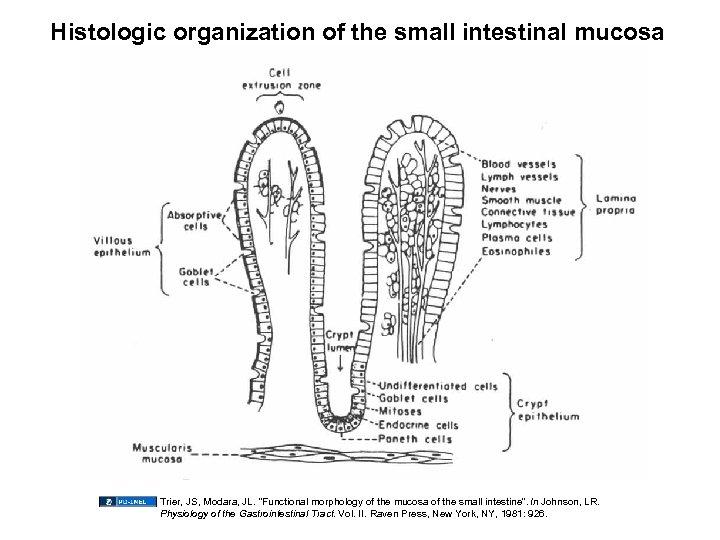 "Histologic organization of the small intestinal mucosa Trier, JS, Modara, JL. ""Functional morphology of"