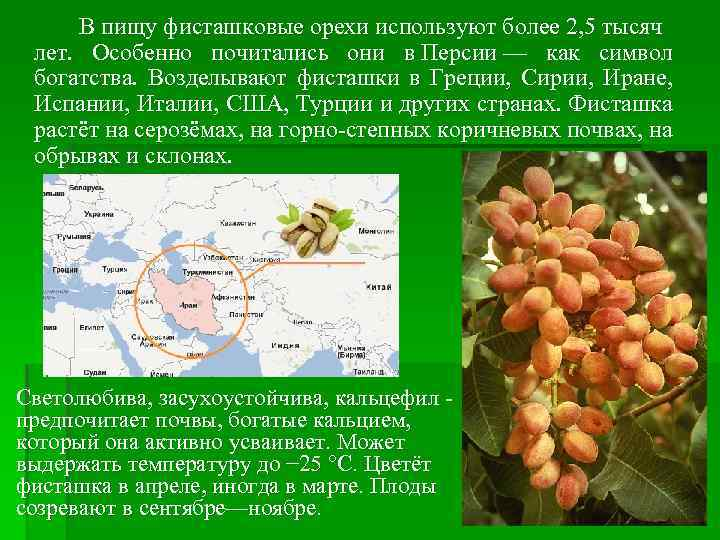 В пищу фисташковые орехи используют более 2, 5 тысяч лет. Особенно почитались они в