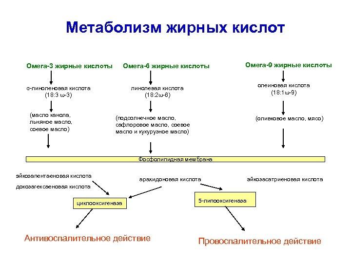 Метаболизм жирных кислот Омега-3 жирные кислоты Омега-6 жирные кислоты α-линоленовая кислота (18: 3 ω-3)