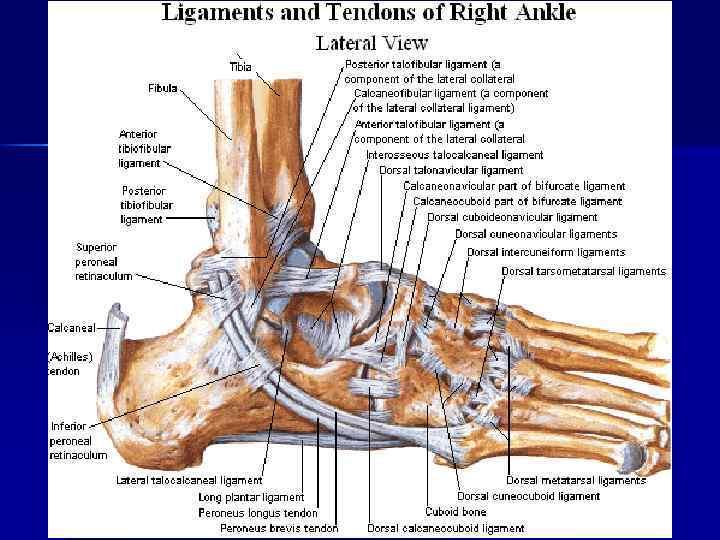 Carte de Scheme La Anatomie