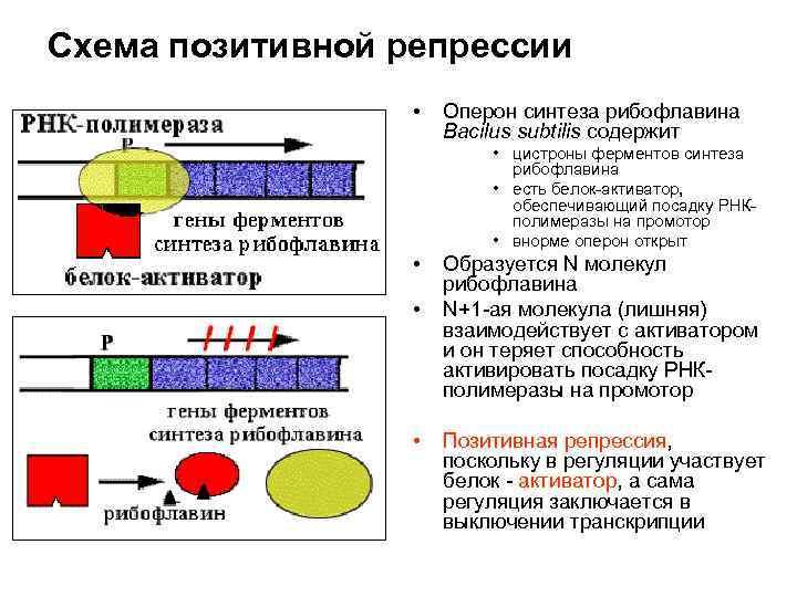 Девушка модель строения и работы оперона модели помощи в социальной работе