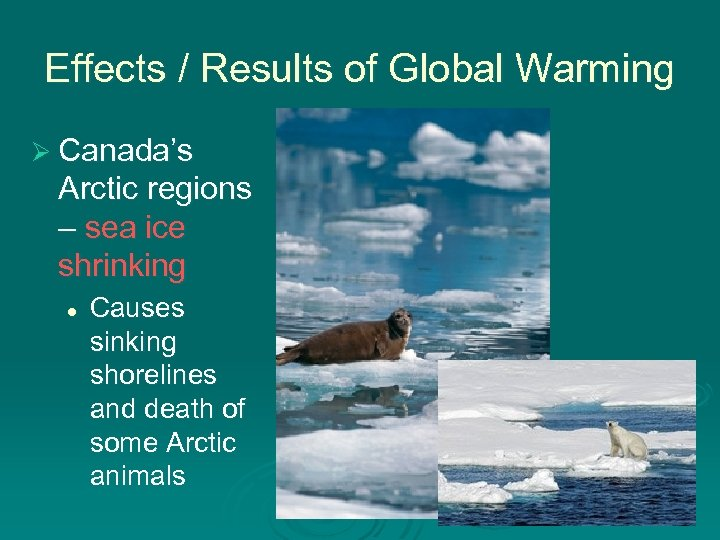 Effects / Results of Global Warming Ø Canada's Arctic regions – sea ice shrinking
