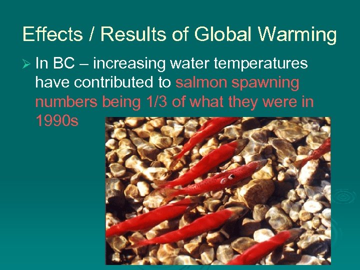 Effects / Results of Global Warming Ø In BC – increasing water temperatures have