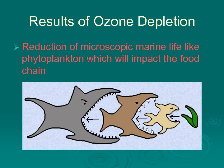 Results of Ozone Depletion Ø Reduction of microscopic marine life like phytoplankton which will